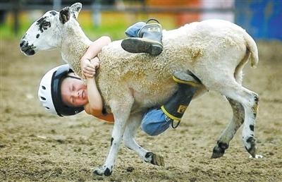 最牛的照片_2008年法新社奇趣类图片集萃